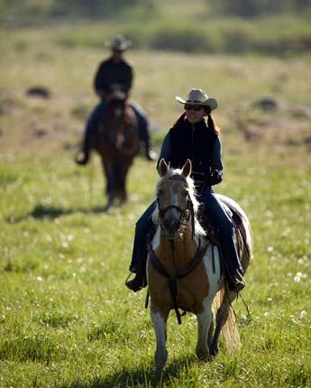 Horse Program