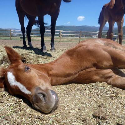 colorado-vacation-horseback-riding