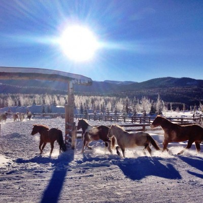 colorado-winter-vacation-horse-program