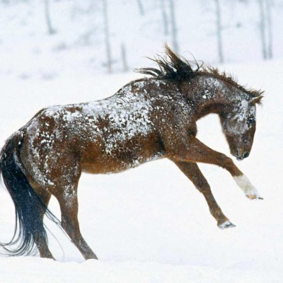 colorado-winter-vacation-horse-program-04