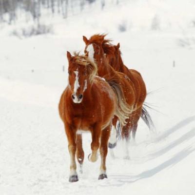 olorado-winter-vacation-horse-program