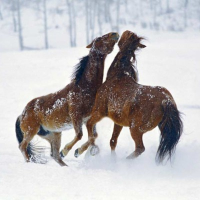 olorado-winter-vacation-horse-program