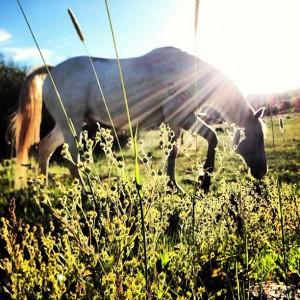 horse in sun cori webb