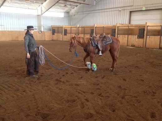 Vista Verde Ranch Colorado Indoor Arena Horses