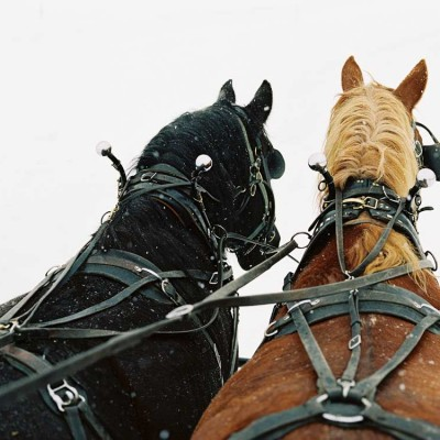 vista-verde-luxury-ranch-winter-sleigh-ride