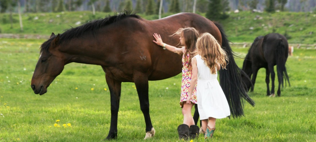 Guests get an up close and personal experience with horses at Vista Verde Guest Ranch in Colorado!