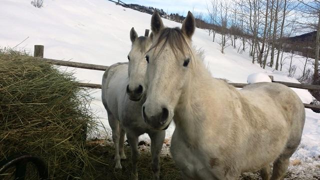 new horses at vista verde guest ranch