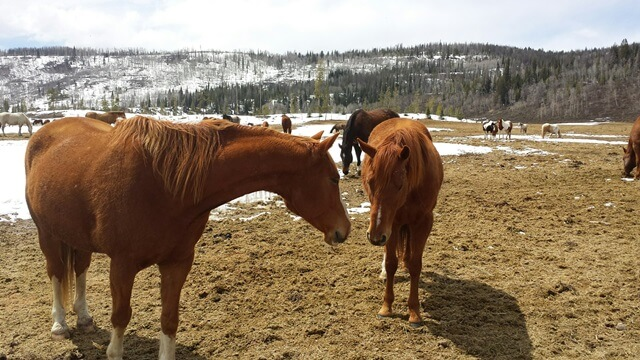 new horses at Colorado dude ranch