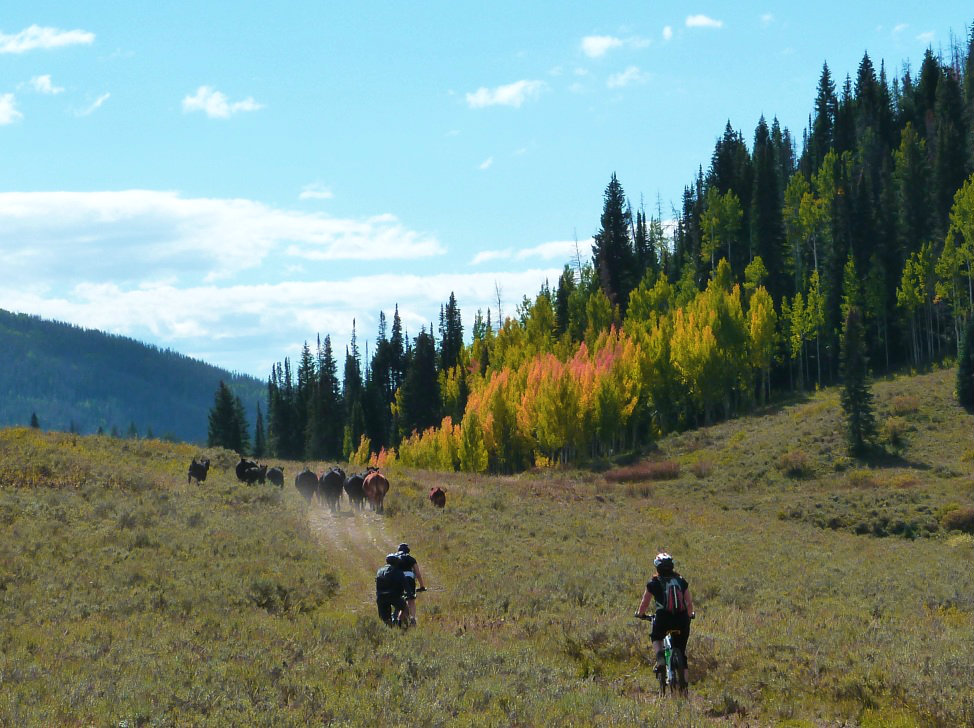 mountain biking at a dude ranch