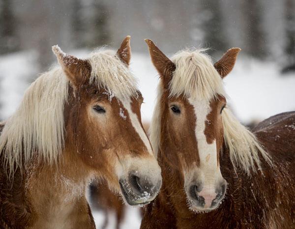 winter dude ranch