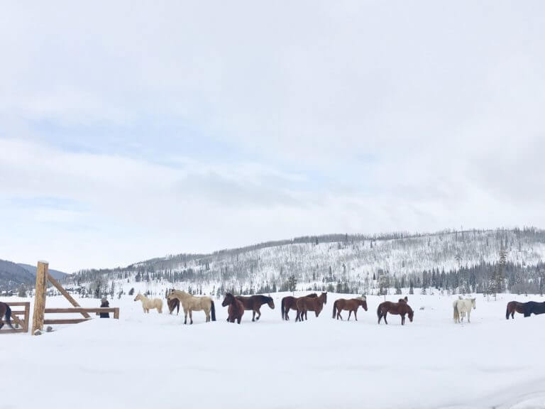 horses and honeymoons at a Colorado dude ranch