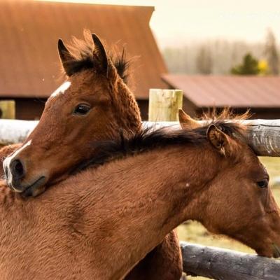 horse photography workshop at Colorado dude ranch