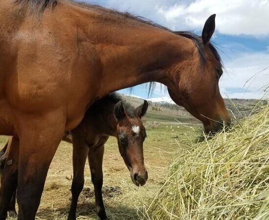 foals at Colorado dude ranch