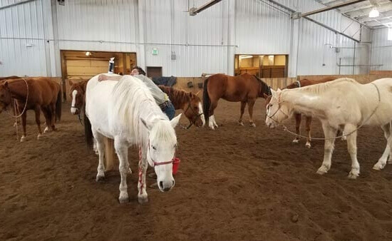 luxury ranch resort horse care