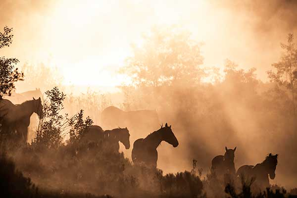 Summer Vacation in Colorado Vista Verde Guest Ranch Horses Family