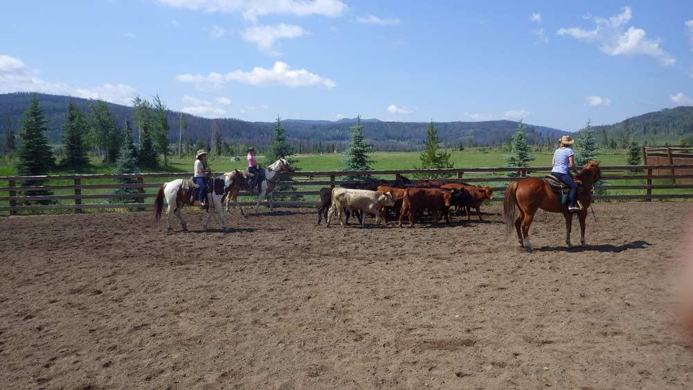 Outdoor arena horses Vista Verde Guest Ranch Colorado